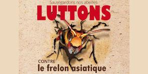 Lutte contre le frelon asiatique en Seine-Maritime
